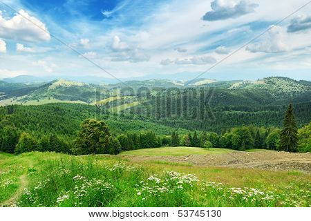 Beautiful mountains covered trees