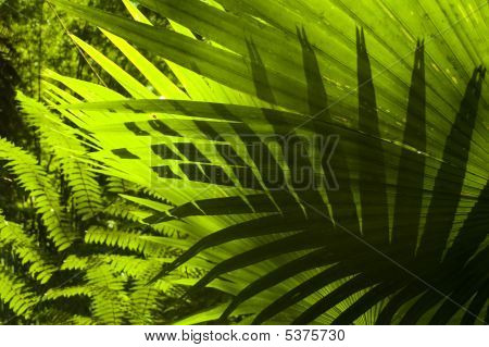 Tropical Forest.