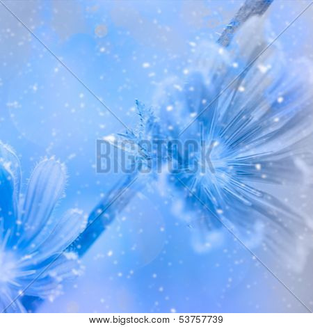 Snowy Blue Weeds