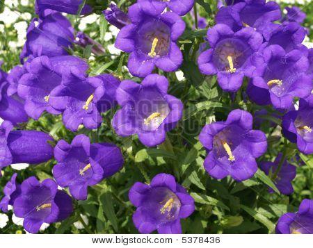 Flower Fancy 2