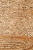 Rough Uncolored Wooden Surface Closeup Background Texture
