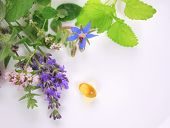 stock photo of borage  - Fresh herbs with flowers and borage omega 3 capsule - JPG