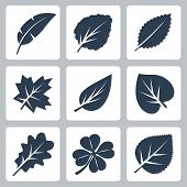 stock photo of elm  - Vector tree leaves icons set over white - JPG
