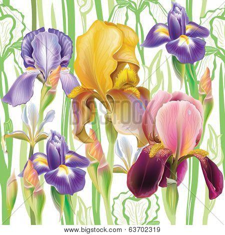 Seamless pattern with Iris flowers