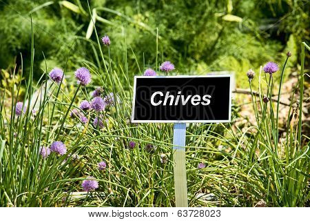 Chives Sign In Garden
