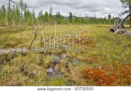 Waterlogged Edge Of The Larch Taiga In Yakutia.