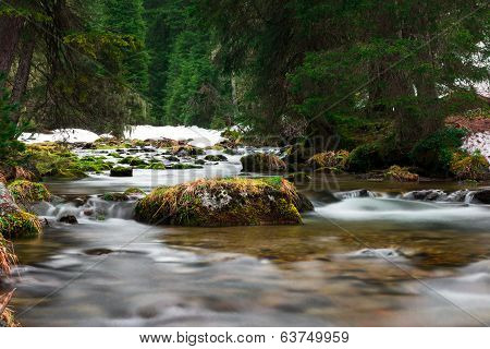 rocks with grass in flowing water of stream in ecologic forest