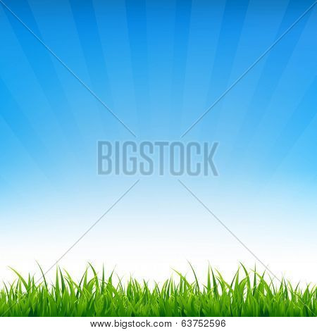 Blue Sky With Grass