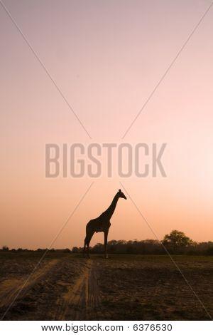 Giraffe Sioulette