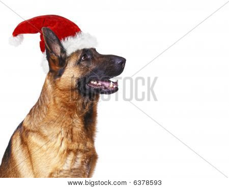Santa Claus Dog Background