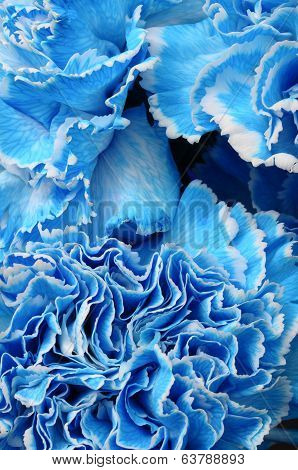 Macro Of Blue Flower Carnation