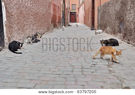 Many Cats On The Streets Of Marrakech, Morocco