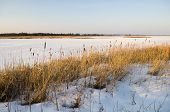 pic of marshlands  - Frozen marshland on a small bay off Lake Ontario - JPG