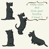 picture of begging  - Sketches of four cute Scottish terriers in different poses - JPG