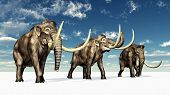 image of mammoth  - Computer generated 3D illustration with three Mammoths in a winter landscape - JPG
