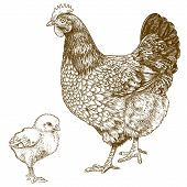 image of cockerels  - vector illustration of engraving chicken and chick on white background - JPG