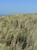 pic of dune grass  - Close up of sand dunes with dune grass - JPG