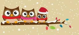 picture of snow owl  - Illustration of owl family on the branch christmas banner - JPG