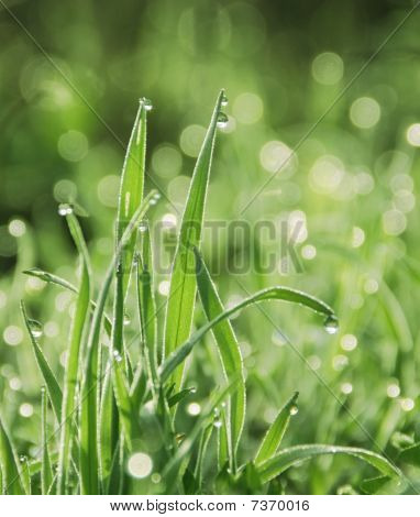 Drop Dew On The Grass
