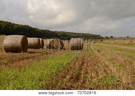 field with hay bails