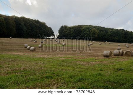 field of hay bails