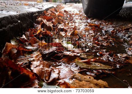 Wet leaves on road