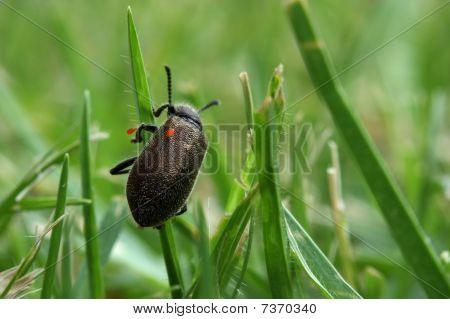 Bugs on bug