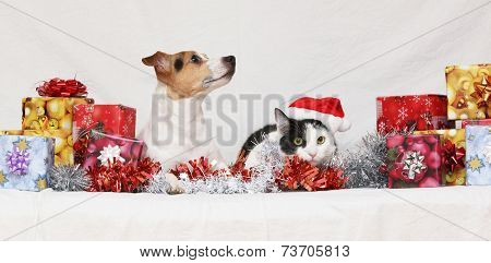 Christmas Jack Rusell Terrier With A Cat