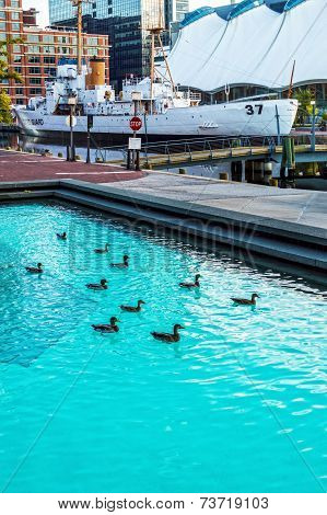 Inner Harbor Ducks