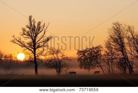 Sunset over cows in a foggy field.Winter season, north Italy, Europe.