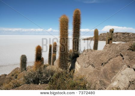 Incahuasi Island In Middle Of Uyuni Salt Flats