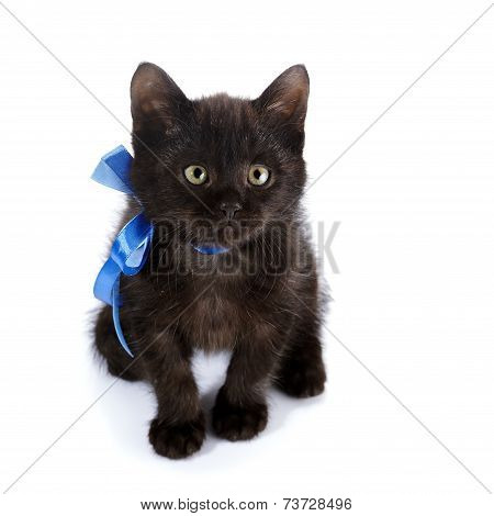 Black Kitty With A Blue Bow.
