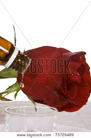 Rose And Oil