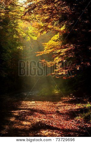 Sunlight Falls On A Forest Road In Autumn