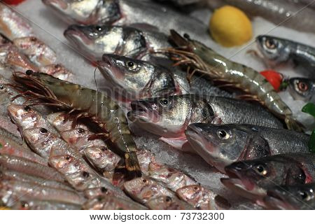 Grocery Store Fish Counter