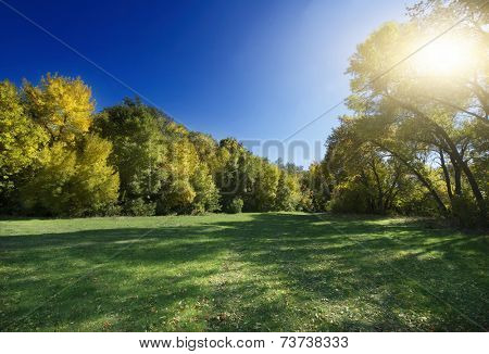 Autumn Landscape. Park in Autumn. Forest in Autumn. Lonely beautiful autumn tree.