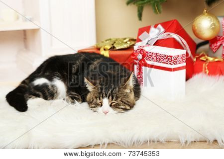 Cute cat lying on carpet in the front of the fireplace