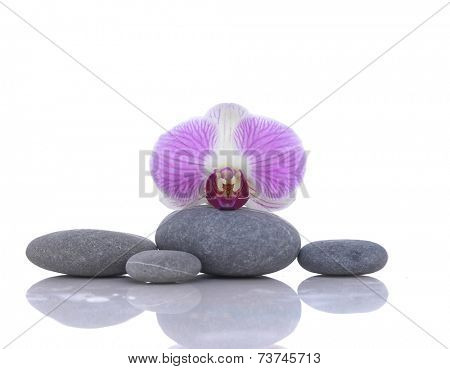 Macro of orchid with gray stones reflection