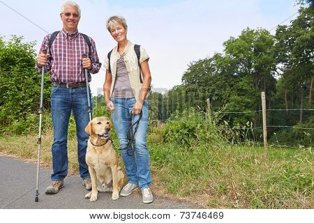 Two senior people walking with a labrador retriever dog in the summer