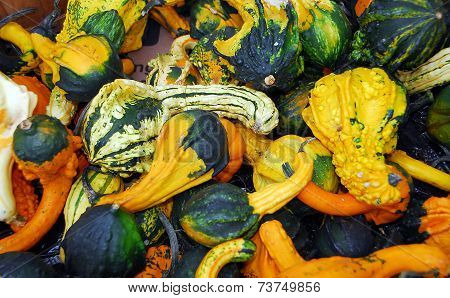 Pumpkin Fruit