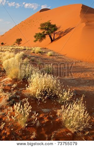 Desert landscape with grasses and a red sand dune, Sossusvlei, Namibia