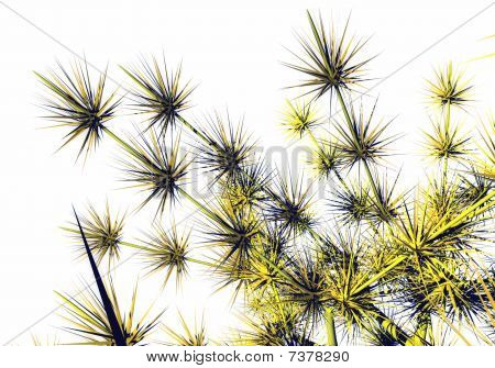 Flowers thorns