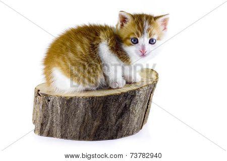 sitting cat on white background