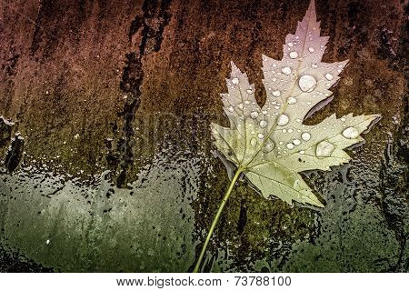 Wet Magestic Leaf