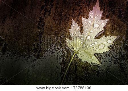True Beautiful Wet Multi-Colored Leaf