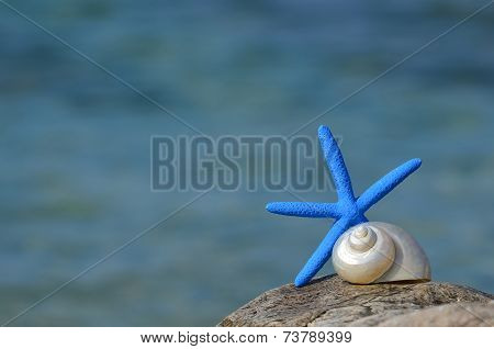 Blue Starfish And Snail