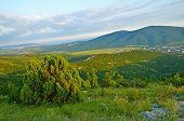 foto of juniper-tree  - Caucasus Mountains in Kabardinka Russia - JPG