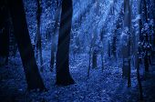 stock photo of moonlit  - Forest on a moonlit night - JPG