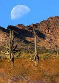 stock photo of thunderhead  - Desert moon over the southwestern USA desert and mountains - JPG