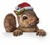 pic of holly  - Holiday squirrel wearing a santa clause hat with holly and red berries hanging over a blank banner sign with copy space as a friendly furry rodent character gripping a billboard advertising a Christmas new year or winter celebration message - JPG